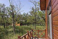 森林中的木屋建筑