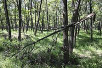 森林中折断的树枝