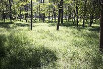 生机勃勃的森林