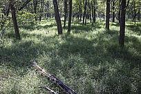 阳光照在森林中的草地上