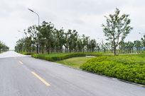 园林道路绿化