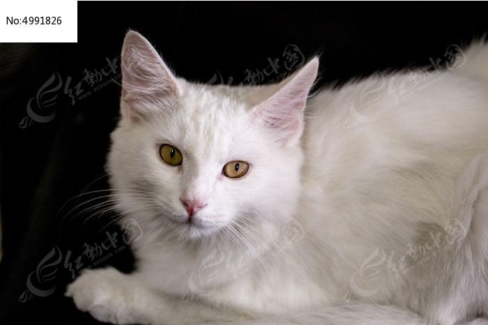 被打扰的安静可爱白猫
