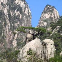 黄山岩石奇松图
