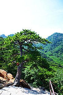 千山大佛寺风景区山坡上的松树与山峰