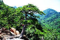 千山大佛寺风景区远处的山峰与山坡上的松树