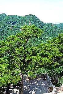千山弥勒膏宝塔前院内松树与远处的山峰