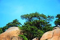千山天成大佛山的山顶与松树