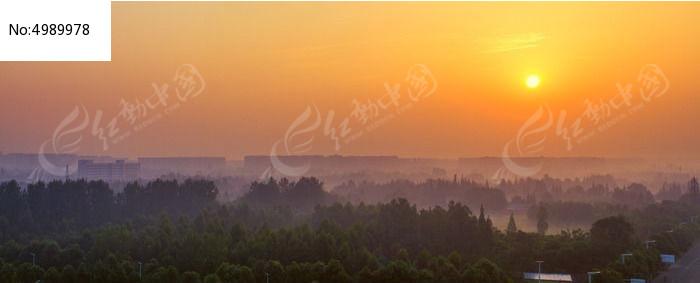 原创摄影图 动物植物 树木枝叶 清晨