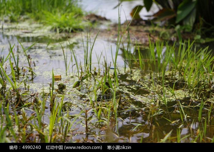 素材 公园/湿地公园园林公园 植物园 植物 生长自然