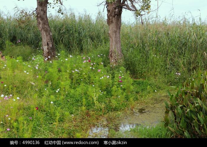 素材 公园/湿地公园实地公园 植物园 植物 花草生长