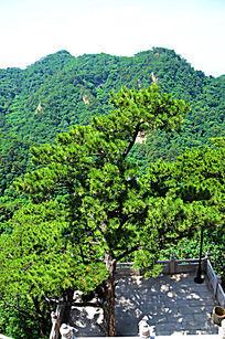 远处的山峰与千山弥勒宝塔前院内松树