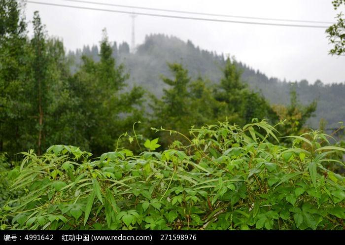雨后森林图片,高清大图_森林树林素材