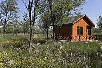 槐林中的特色木质建筑