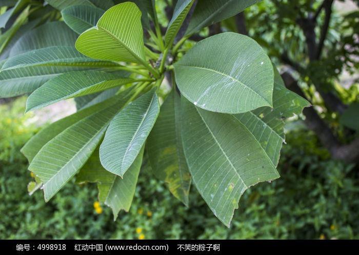 原创摄影图 动物植物 树木枝叶 南湖公园绿色叶子  请您分享: 红动网