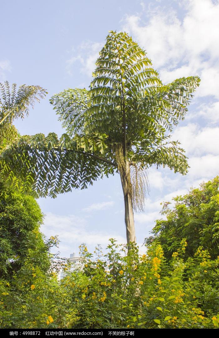 原创摄影图 动物植物 树木枝叶 南湖公园奇形怪状的树  请您分享: 红