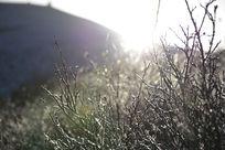 清新唯美的草地摄影