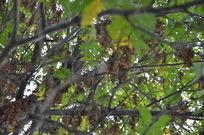 树林中的鸟