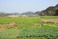乡村田园生态风景
