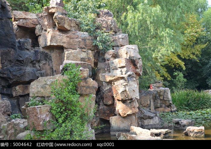 石头山上长植物图片,高清大图