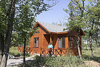 原始森林中的木屋