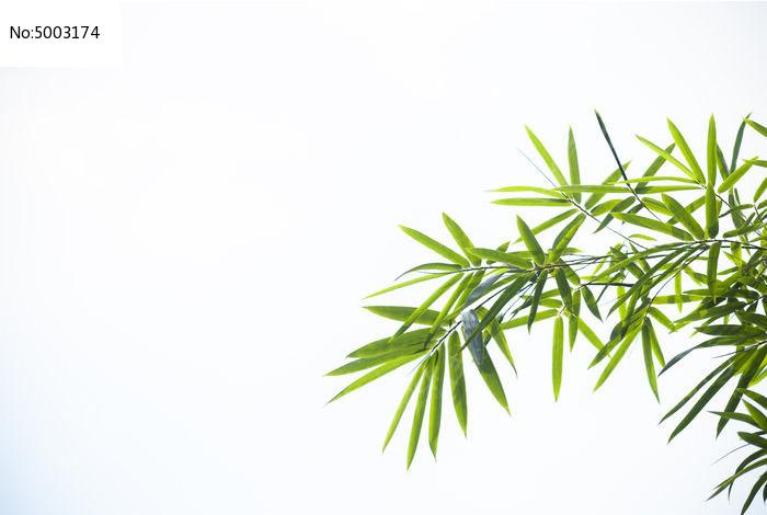 原创摄影图 动物植物 树木枝叶 白色背景竹叶