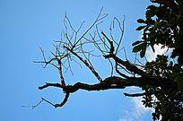枯树背景素材