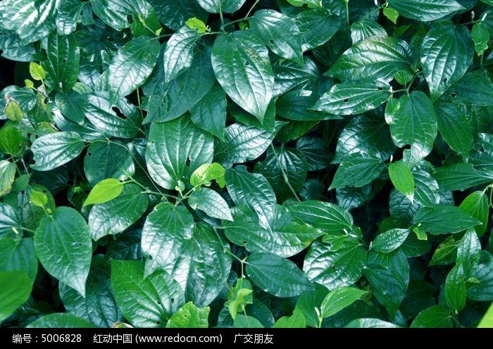 原创摄影图 动物植物 树木枝叶 绿叶叶子叶片图