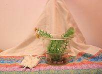 民族风布匹上的玻璃缸和海螺