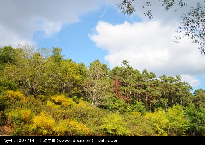 原创摄影图 动物植物 花卉花草 森林蓝天