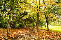 森林秋天景色
