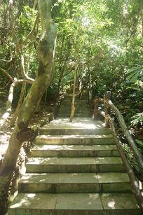 森林中台阶