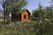小镇槐林中的木屋