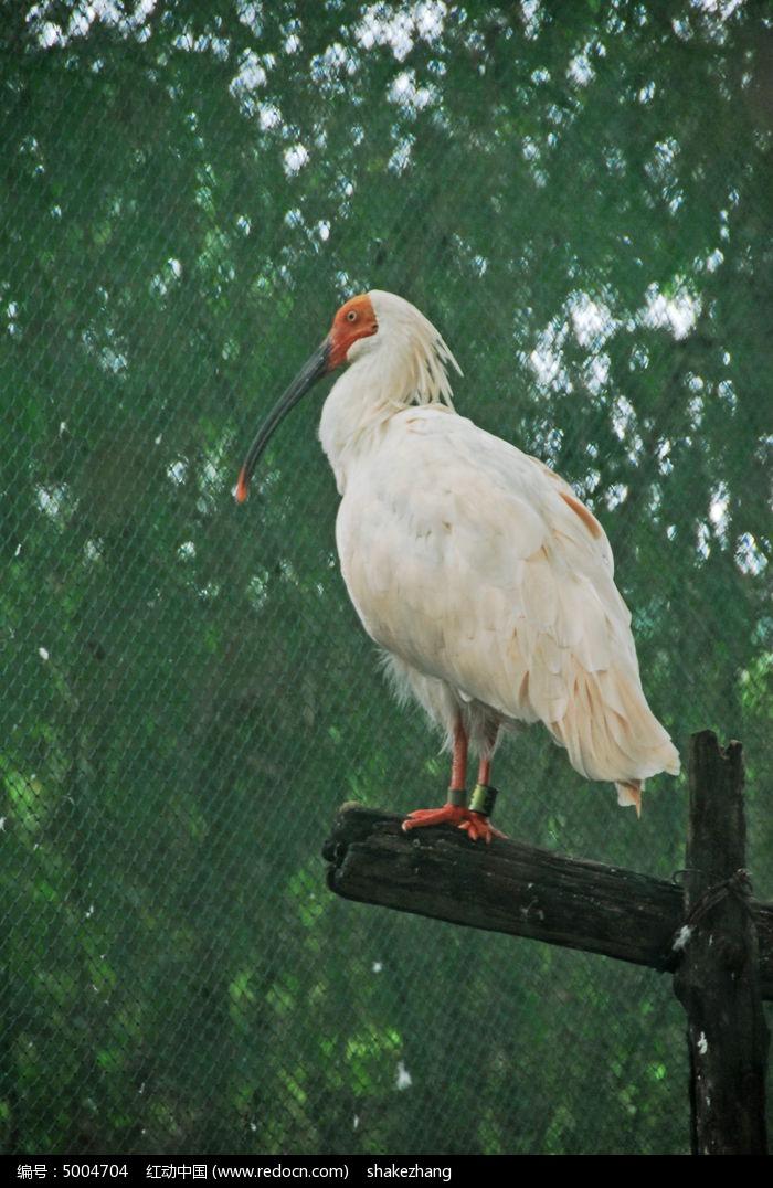 鸟类 珍稀保护动物