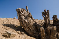 枯萎的树木
