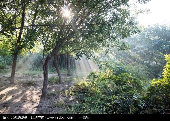 阳光透过树林图片,高清大图_树木枝叶素材