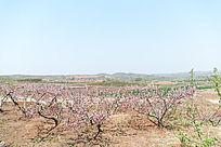 初春季节胶东地区田园风光