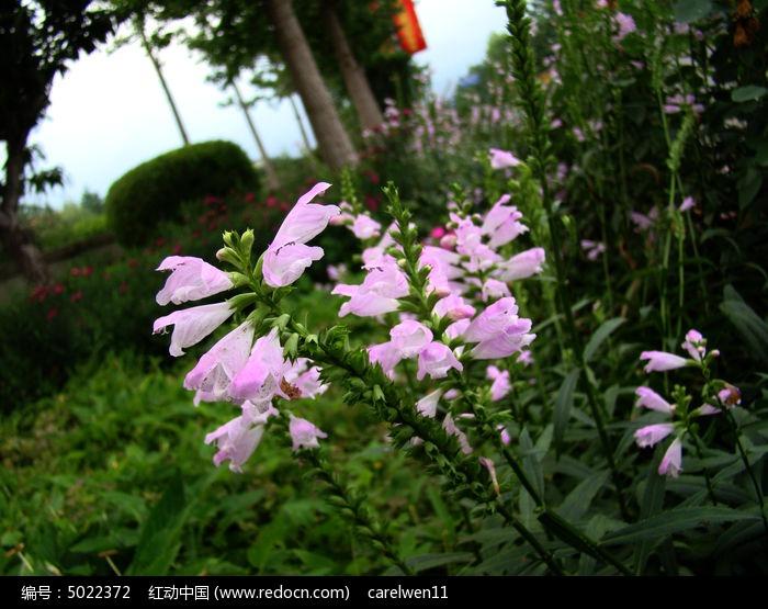 原创摄影图 动物植物 花卉花草 和树生长在一起的芝麻花