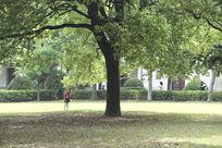 茂盛的大树