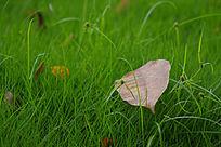 青草上掉落的的一片枯叶