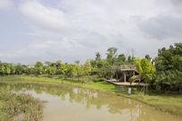 五象湖公园湿地景观