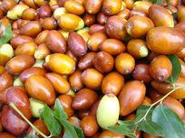 秋天里的红枣