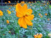 公园里的黄色花朵