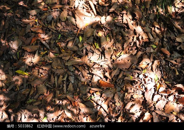 枯叶满地图片,高清大图_森林树林素材
