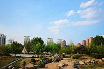 蓝天下的孟泰公园里的绿树林