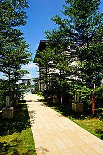 楼盘绿化建筑