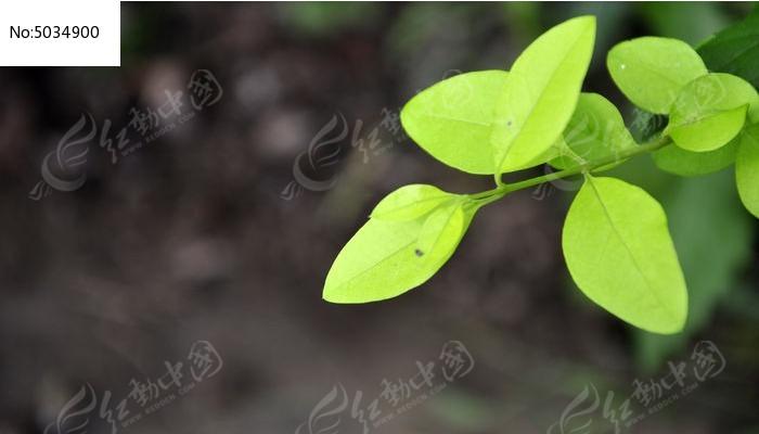 原创摄影图 动物植物 花卉花草 绿色的小树枝高清摄影  请您分享: 红