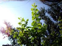 绿色的叶子冲向天空