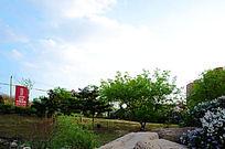 孟泰公园里的绿树与天上的云