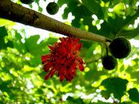 野生树上的红果实