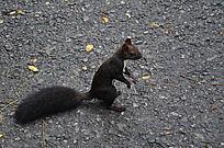 玉佛山人行路上的松鼠